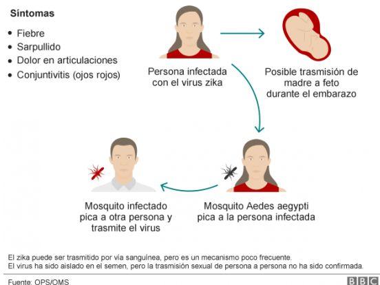 Ciclo de transmisión del virus Zica
